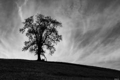 Landscape Noir
