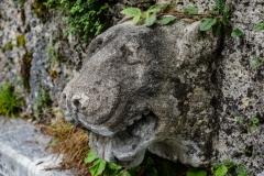 Löwenmäulchen