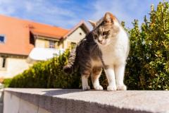 caturday_42