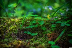 Im Wald - Reutlingen
