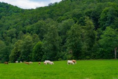 Viehweide - Bad Urach vom Wasserfall zurück zum Parkplatz